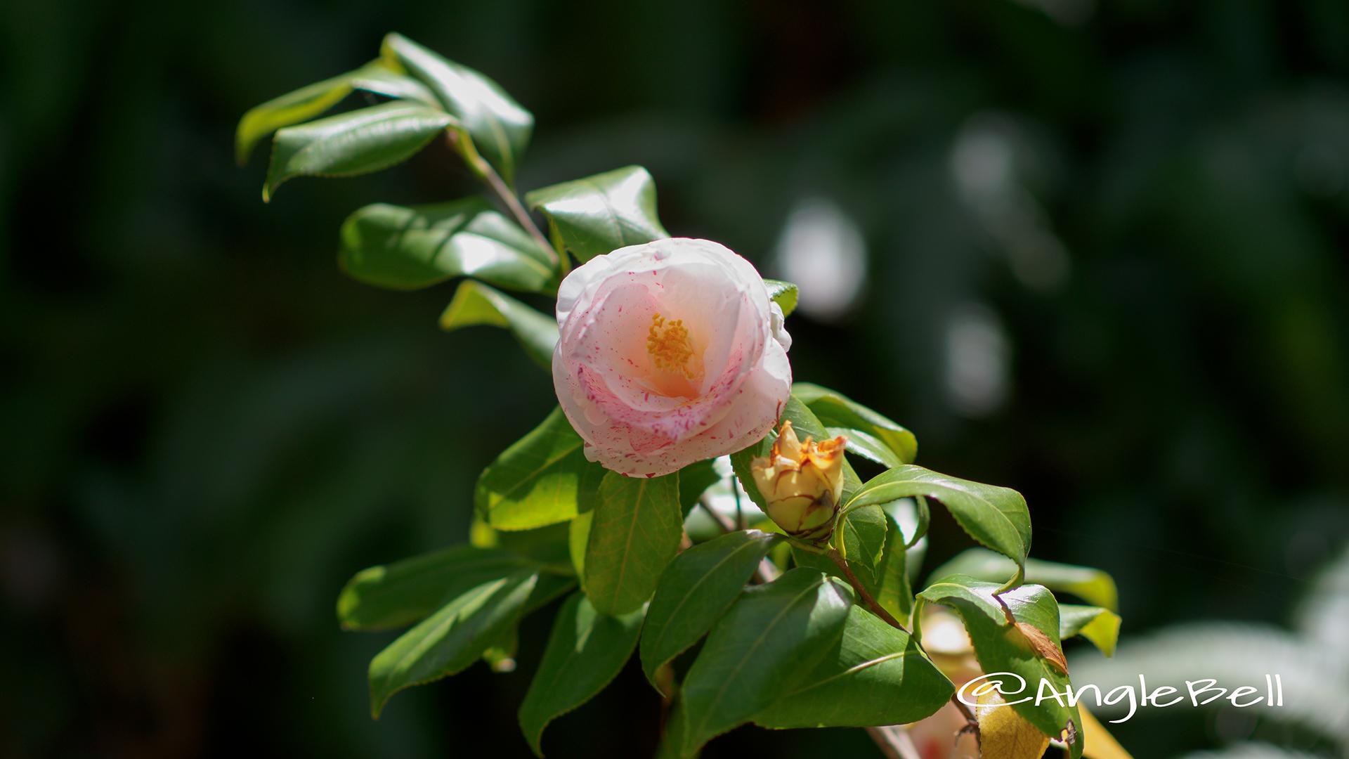 ベティ・フォイ・サンダース Flower Photo2
