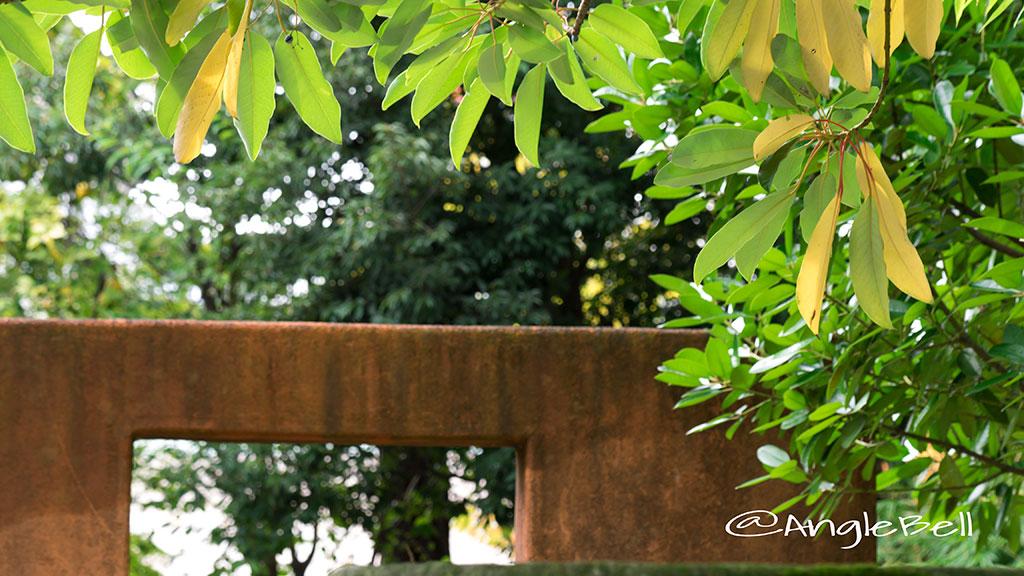 ユズリハ 譲り葉 Flower Photo2