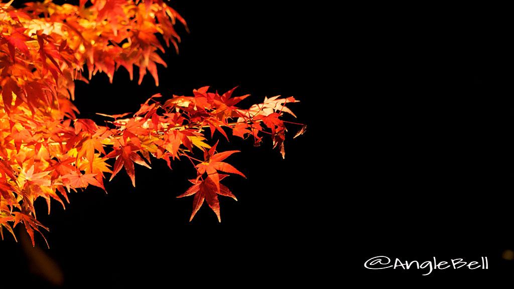 カエデ 楓 Flower Photo5