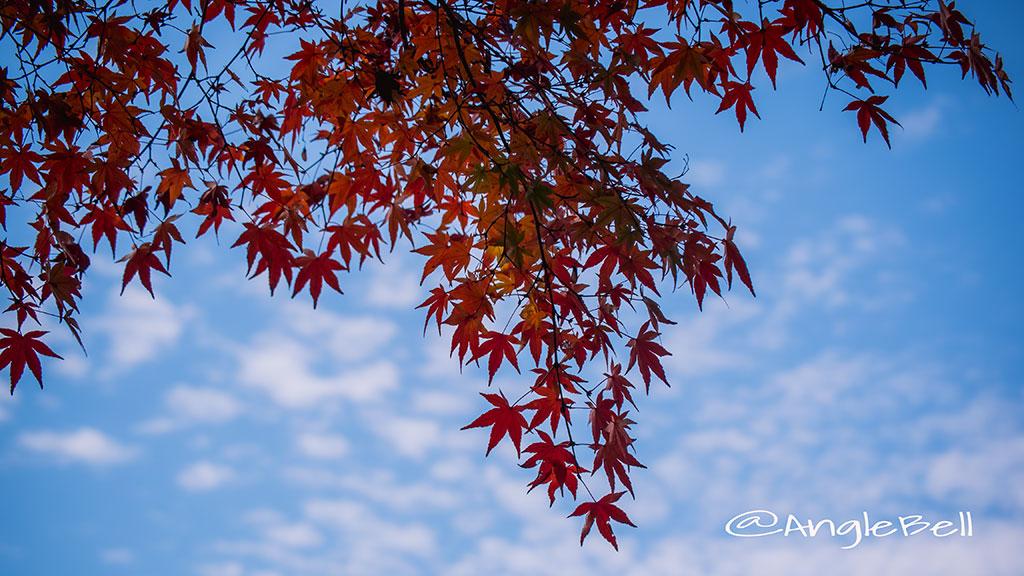 カエデ 楓 Flower Photo3
