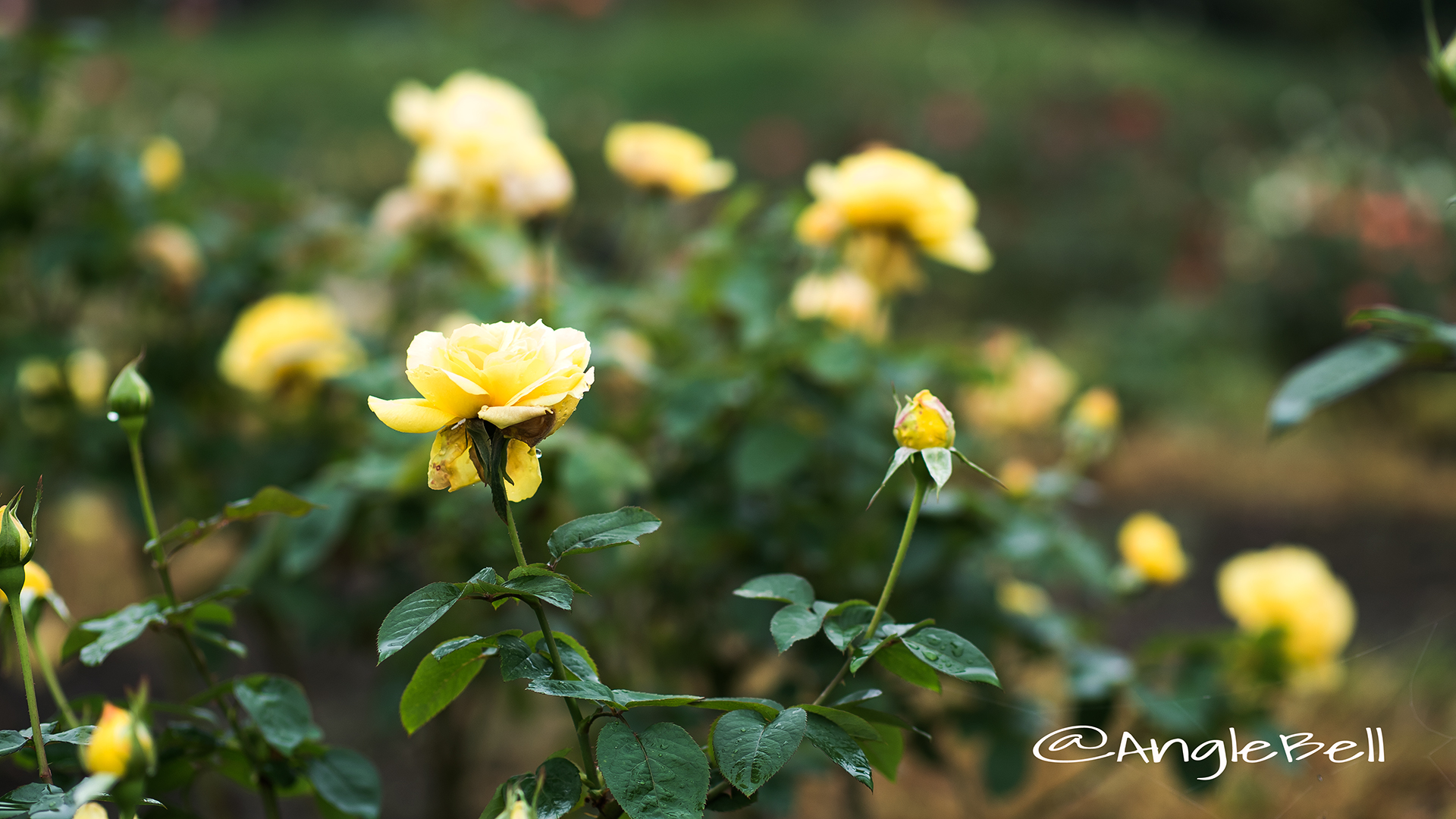 星光 Flower Photo2