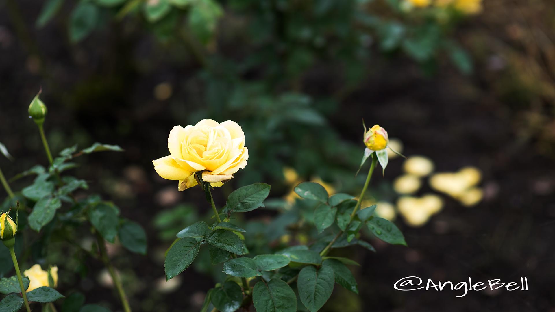 星光 Flower Photo3