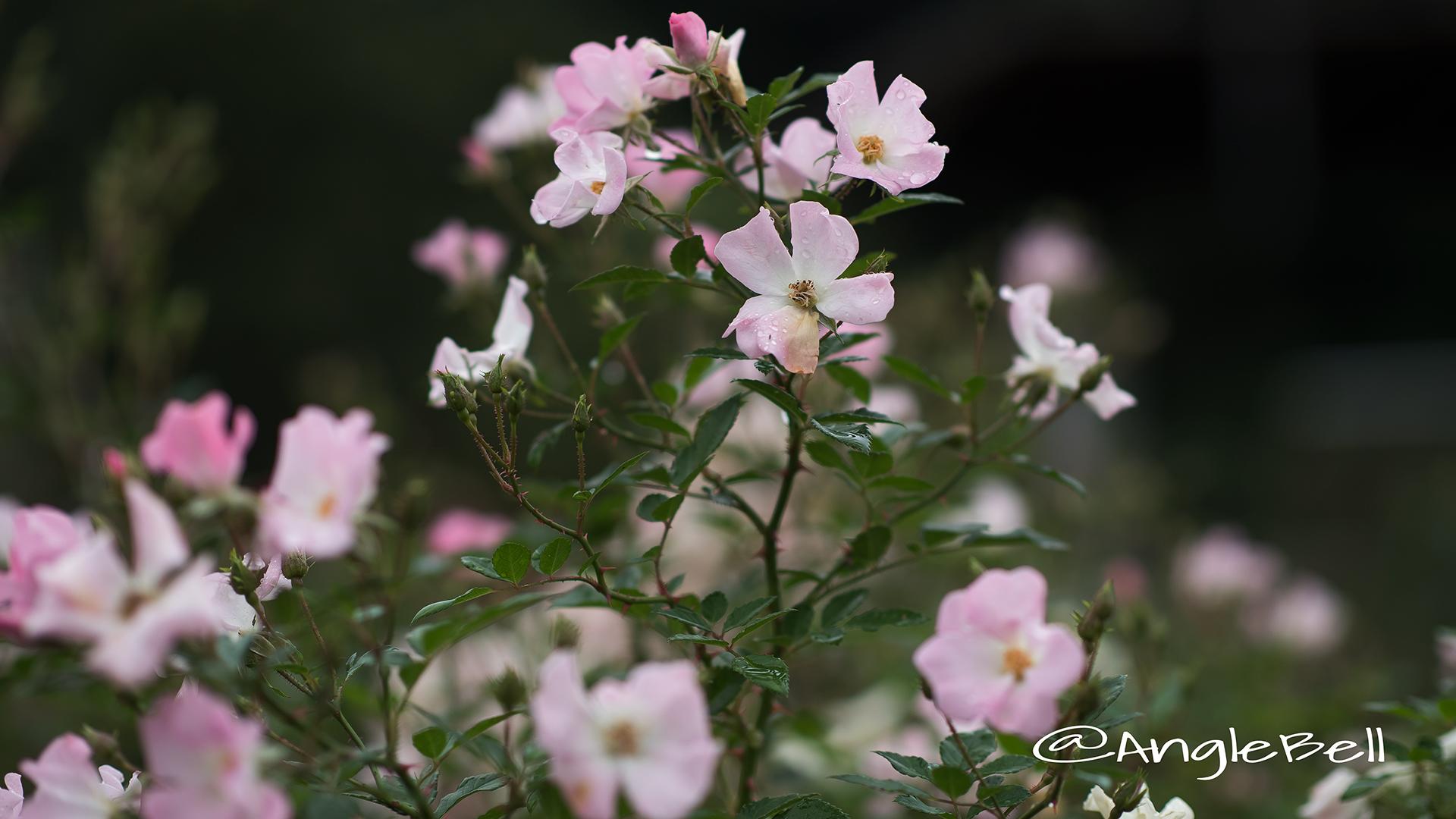 春の海 Flower Photo2