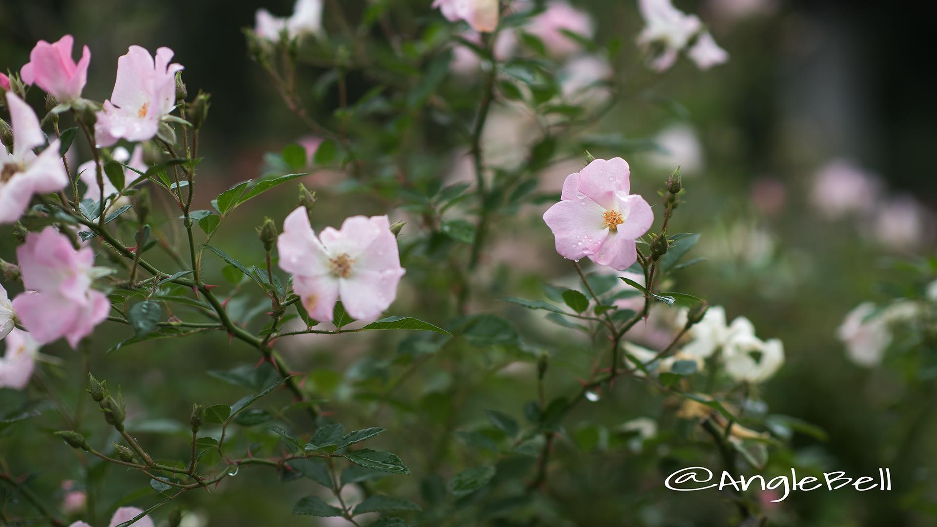 春の海 Flower Photo4