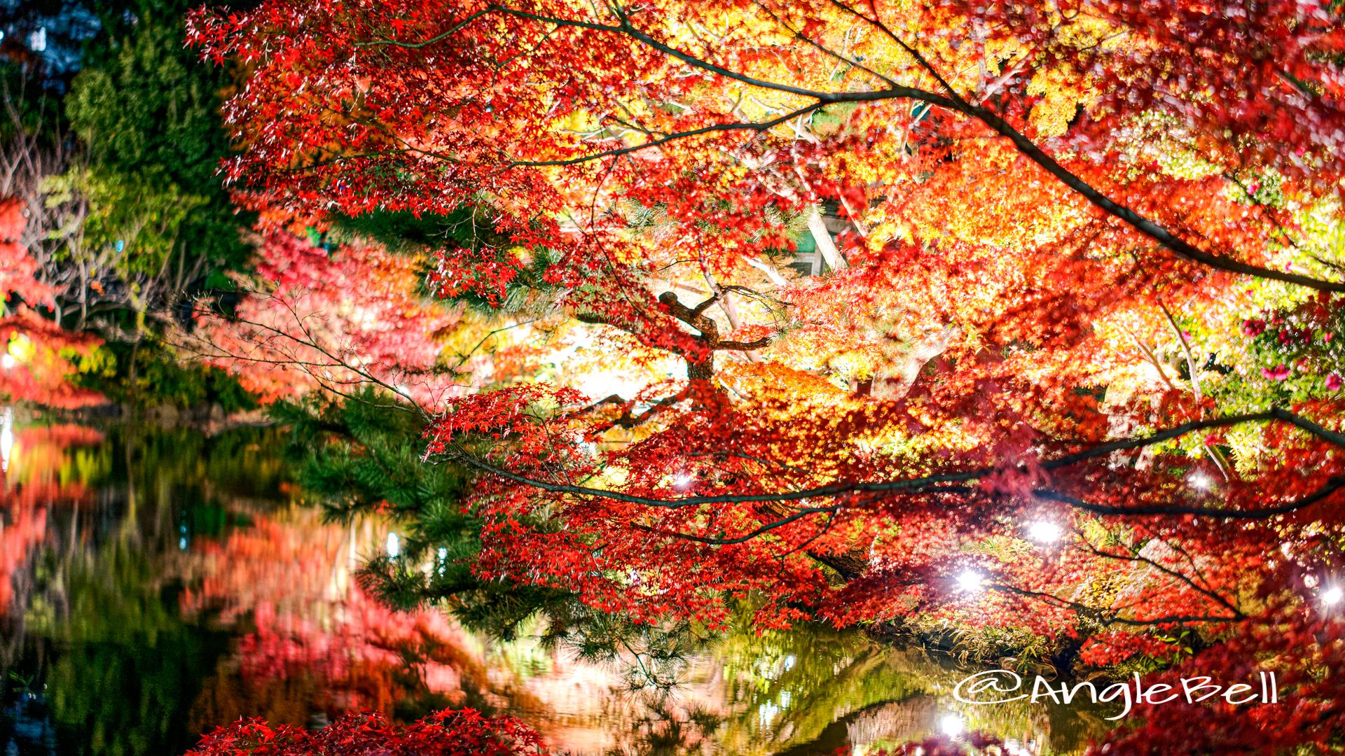 カエデ 楓 Flower Photo2019_1