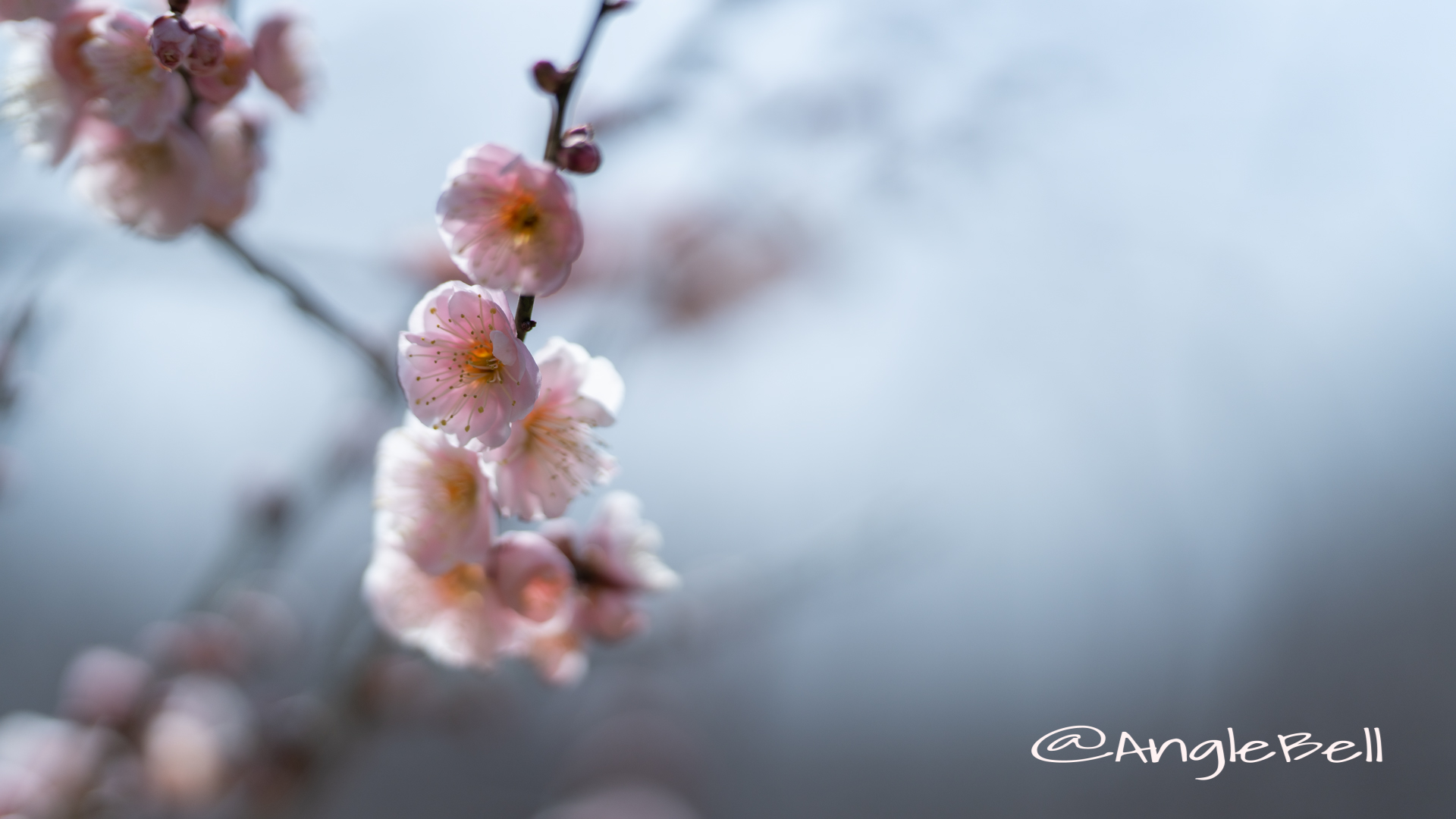 見驚 Flower Photo3