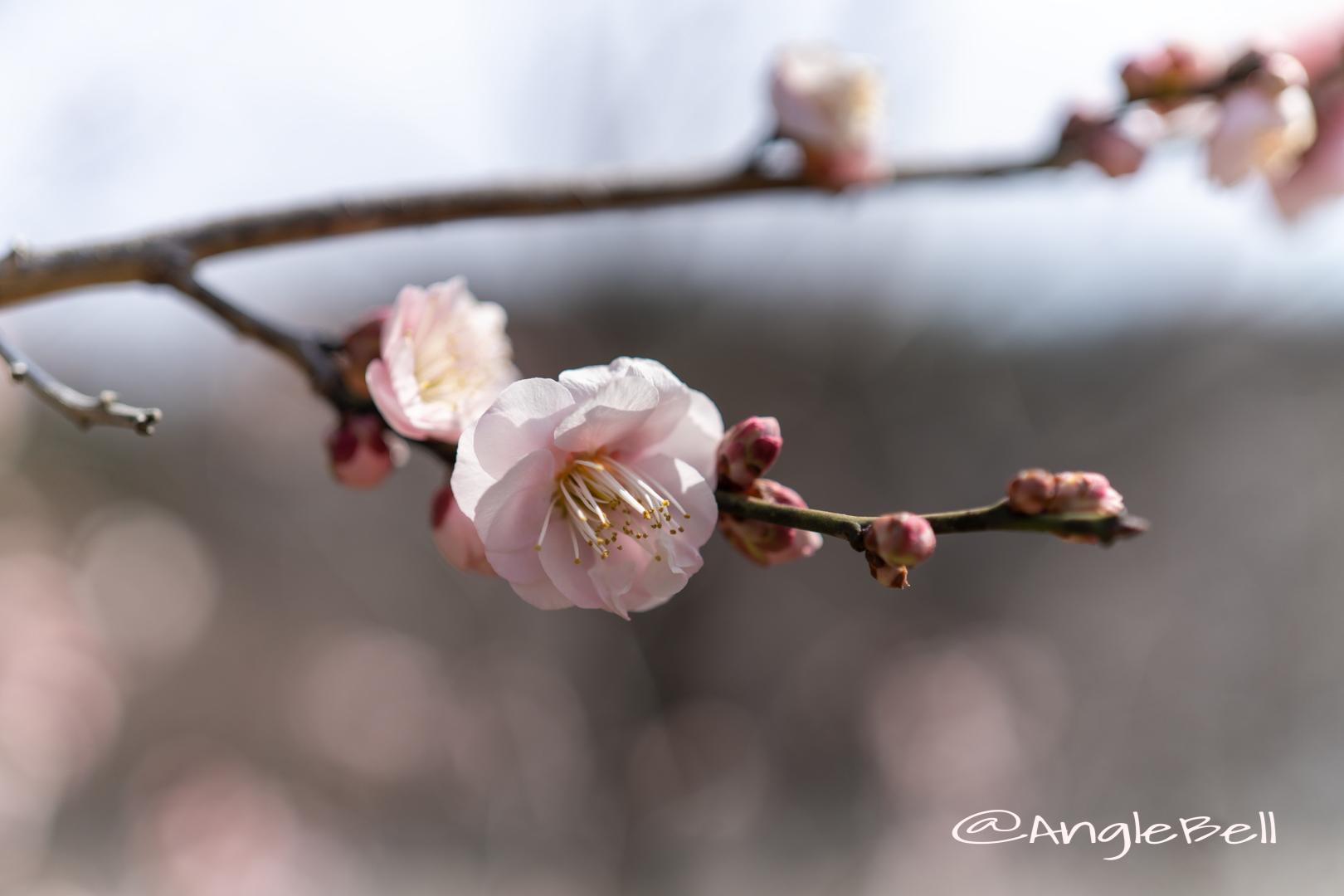 見驚 Flower Photo2