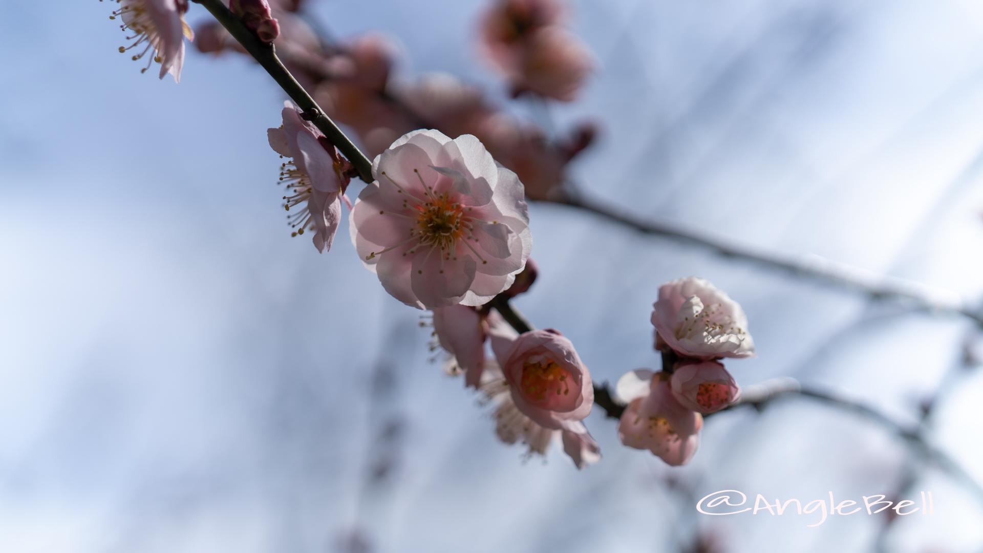 見驚 Flower Photo1