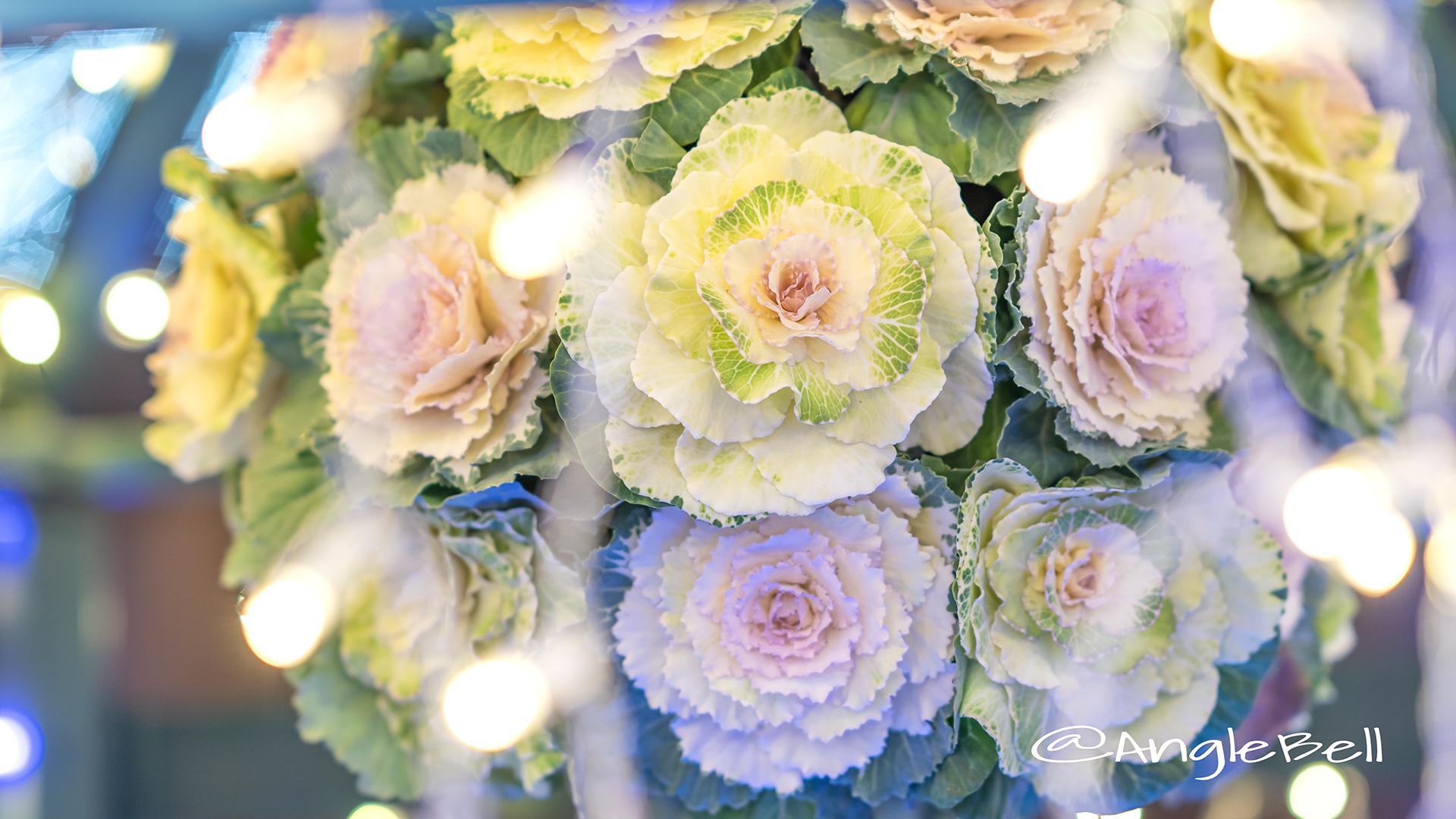 ハボタン 葉牡丹 Flower Photo5