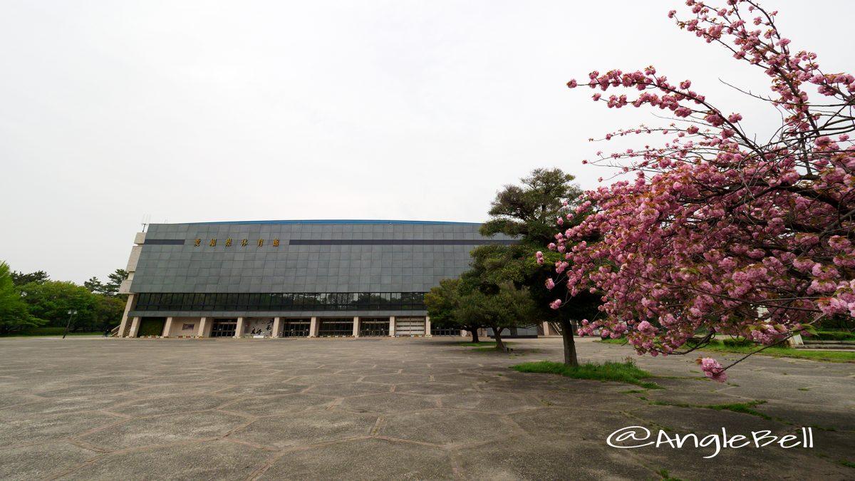 愛知県体育館と八重桜