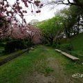 名古屋城 二之丸東庭園 八重桜