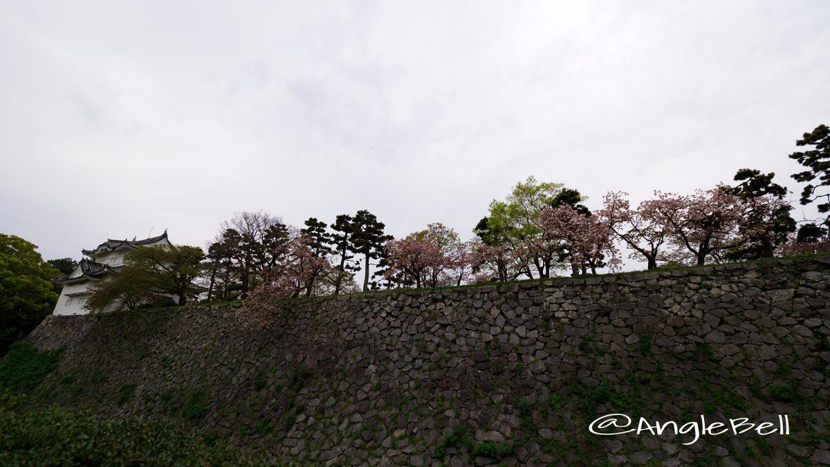 東南隅櫓と内堀のヤエザクラ