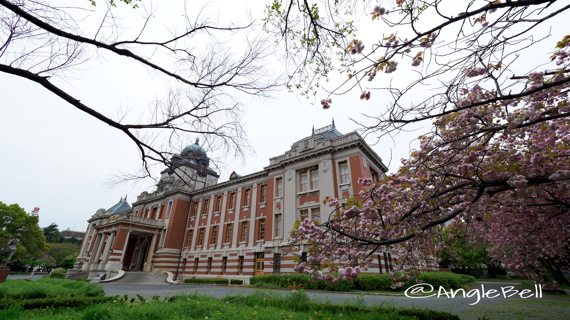 名古屋市市政資料館 八重桜