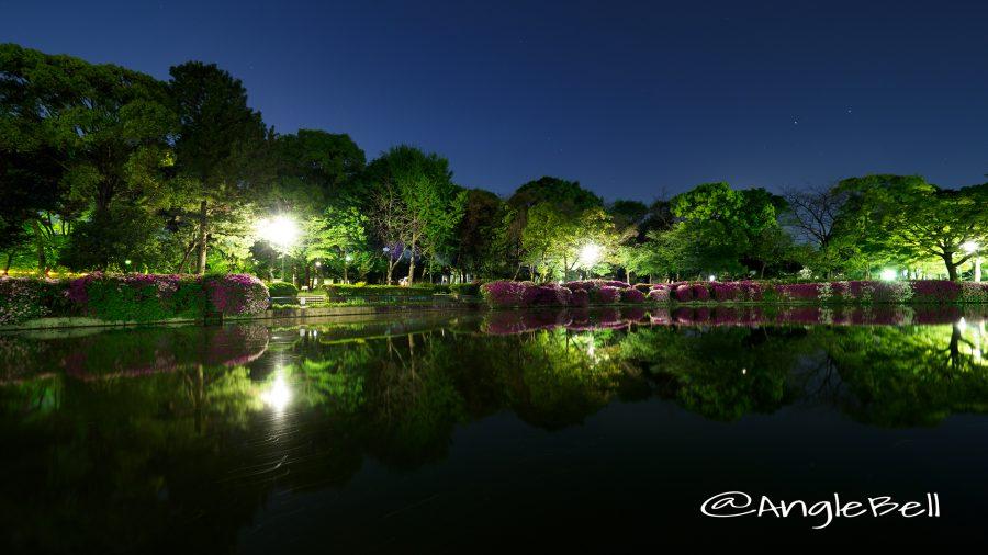名城公園 御深井池(おふけ池)とツツジ(躑躅)