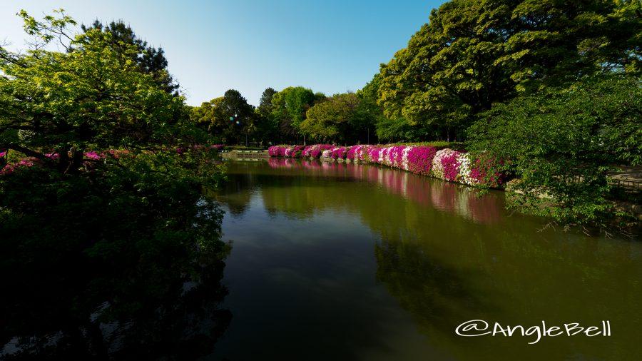 御深井西橋から見る御深井池(おふけ池)とツツジ(躑躅) 早朝