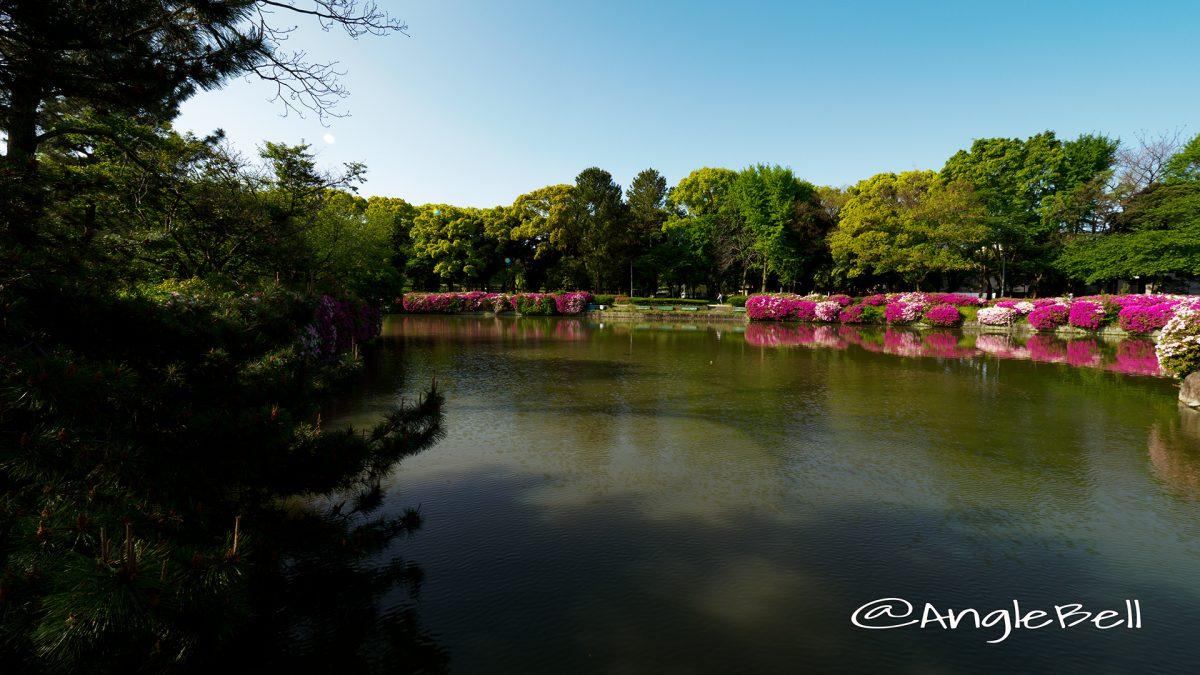 御深井橋から見る御深井池(おふけ池)とツツジ(躑躅) 早朝