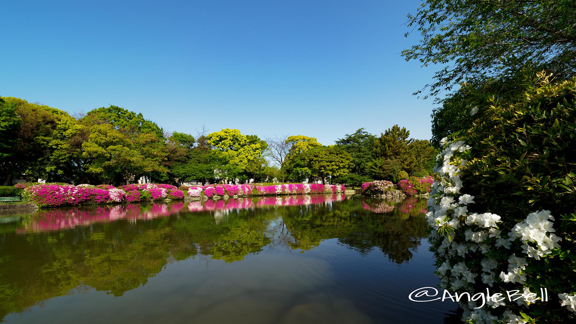 名城公園 御深井池(おふけ池)とツツジ(躑躅) 早朝