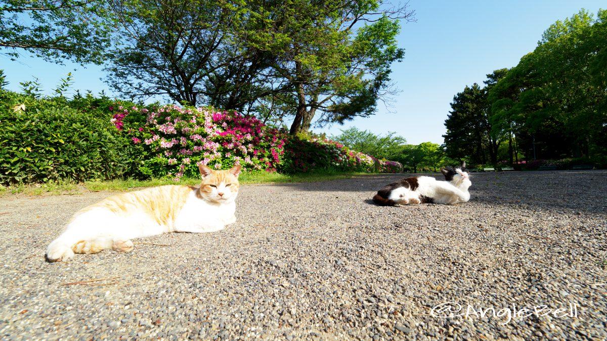 名城公園 ネコとツツジ