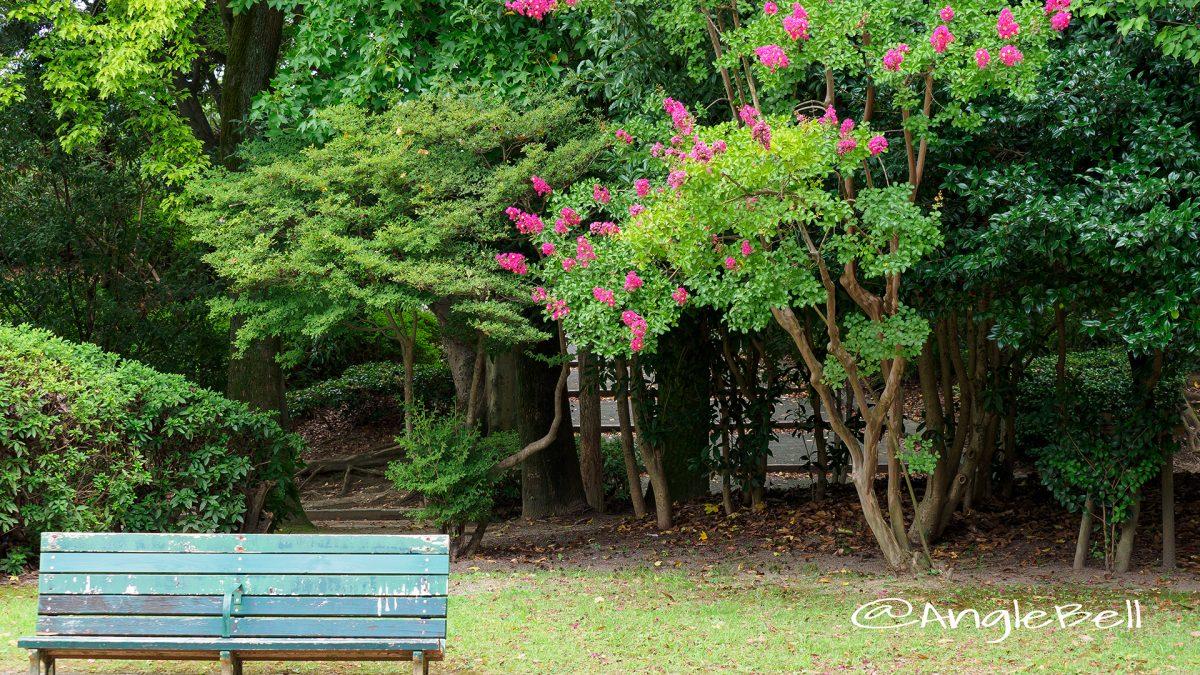 名城公園北園 ベンチと百日紅(サルスベリ)
