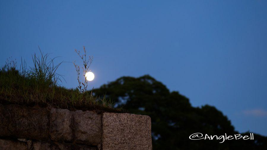 名古屋城 外堀 雑草と月のシルエット