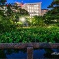 夜景 鶴舞公園 鈴菜橋から見る胡蝶ケ池と蓮