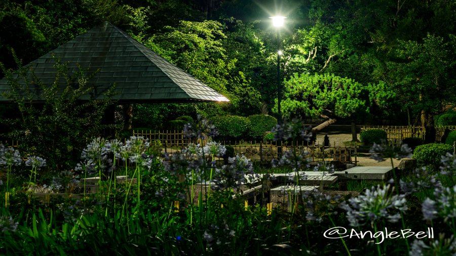 夜景 鶴舞公園 菖蒲池