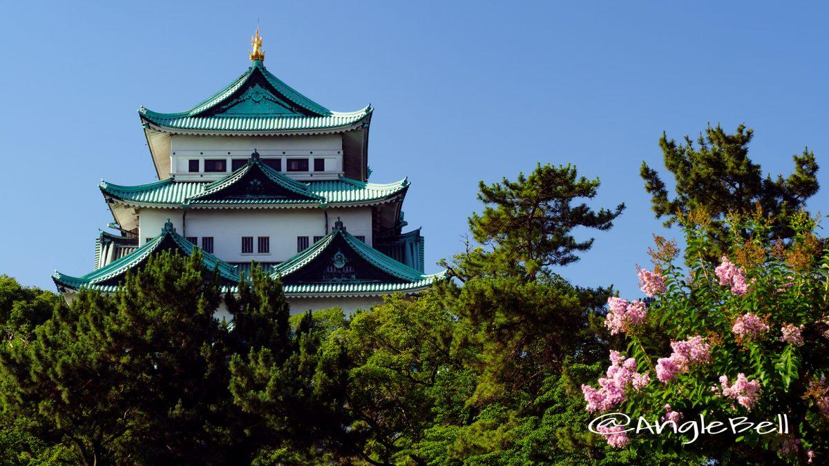 外堀沿いから見る名古屋城と百日紅(サルスベリ)