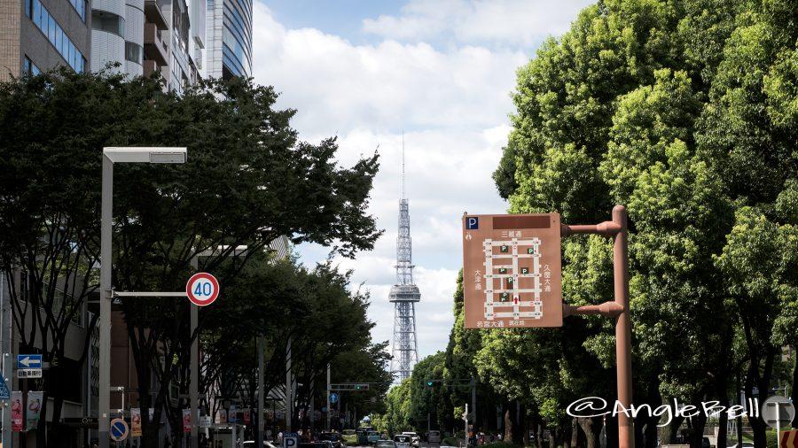若宮大通 交差点のケヤキとクスノキの並木 2017夏