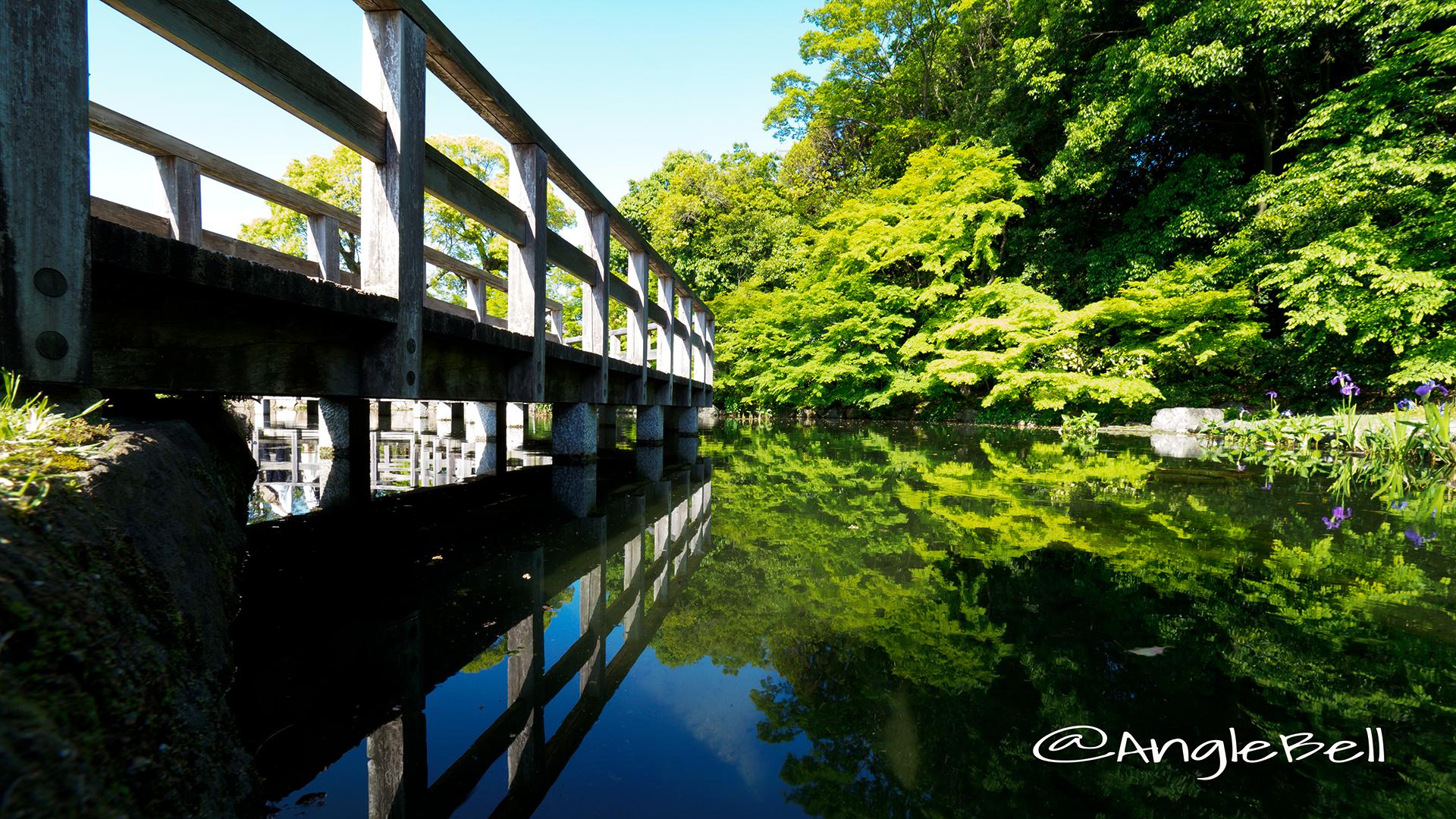 徳川園 西湖堤東側の湖面とカキツバタ