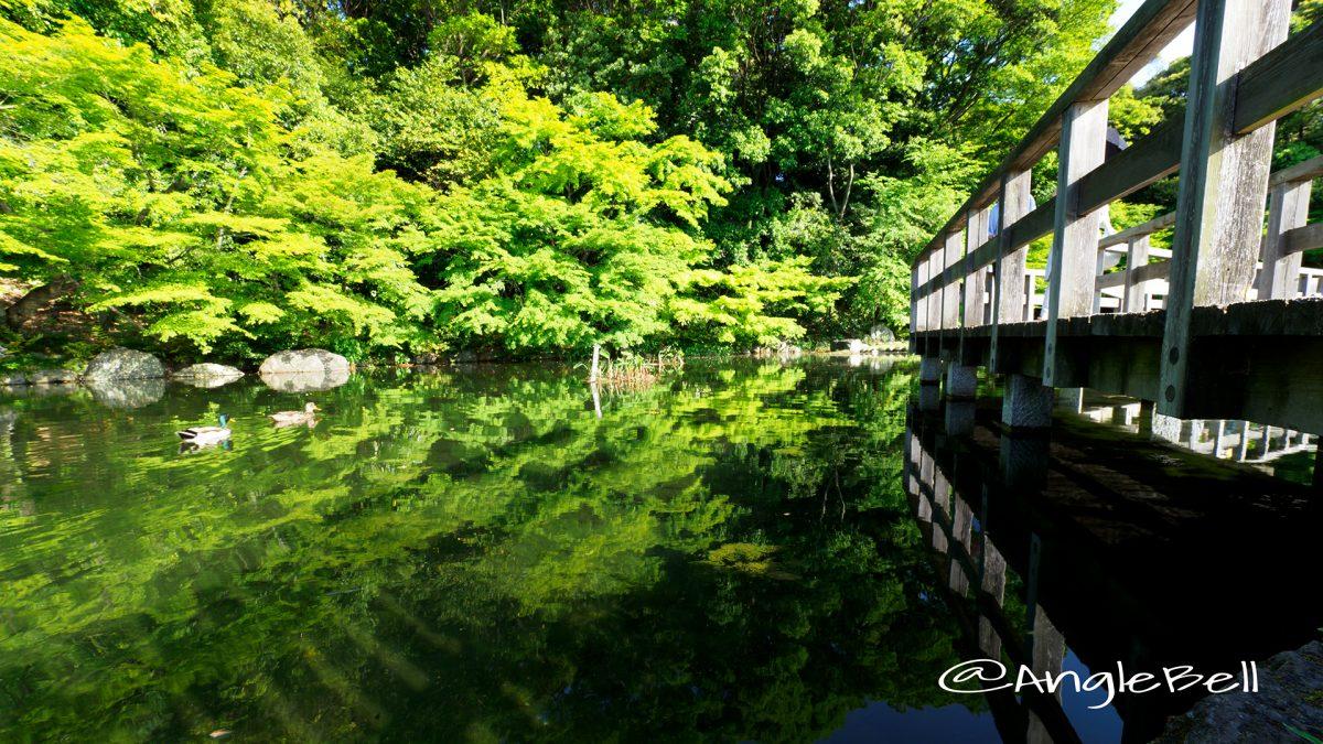 徳川園 西湖堤東側の湖面