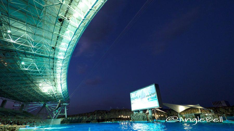 名古屋港水族館 イルカのナイトパフォーマンス