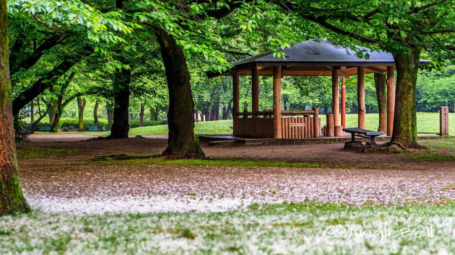 名城公園 せせらぎ亭とナンジャモンジャの花絨毯