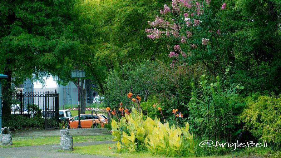 久屋大通庭園フラリエ カンナと百日紅(サルスベリ)