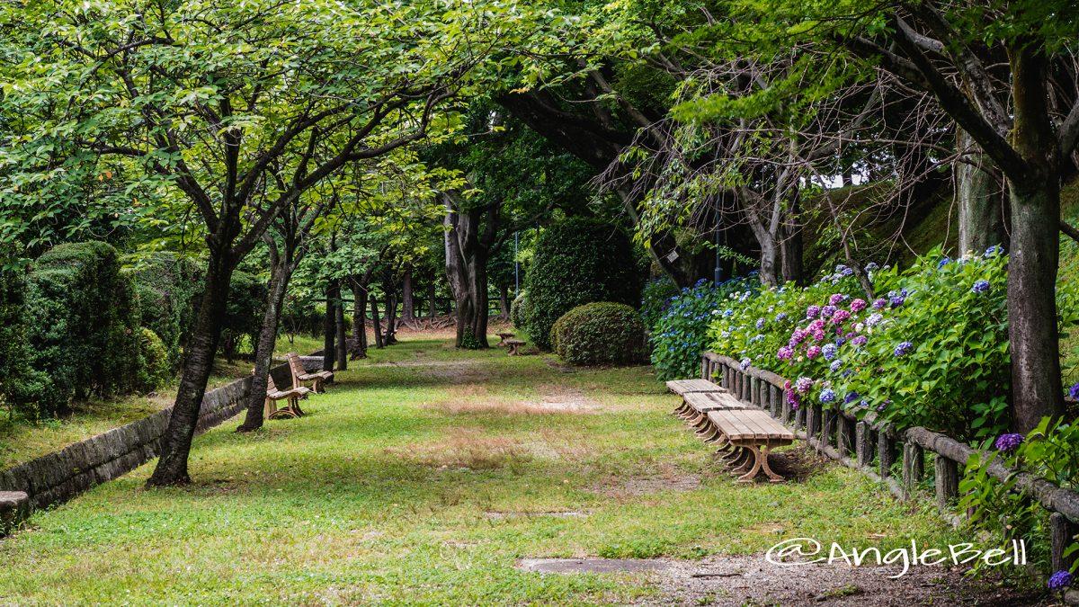 名古屋城 二ノ丸東庭園 アジサイ(紫陽花)