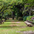 名古屋城 二之丸東庭園 アジサイ(紫陽花)