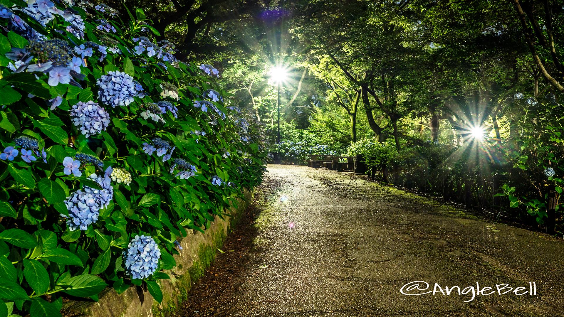 夜景 鶴舞公園 あじさいの散歩道