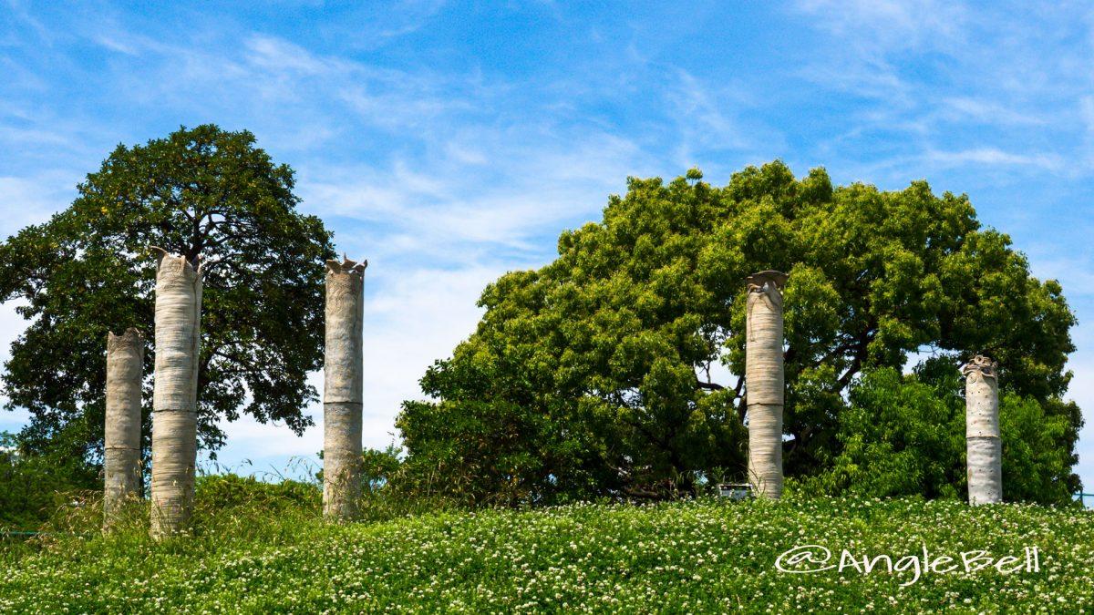 白鳥公園 小さな丘のシロツメクサ