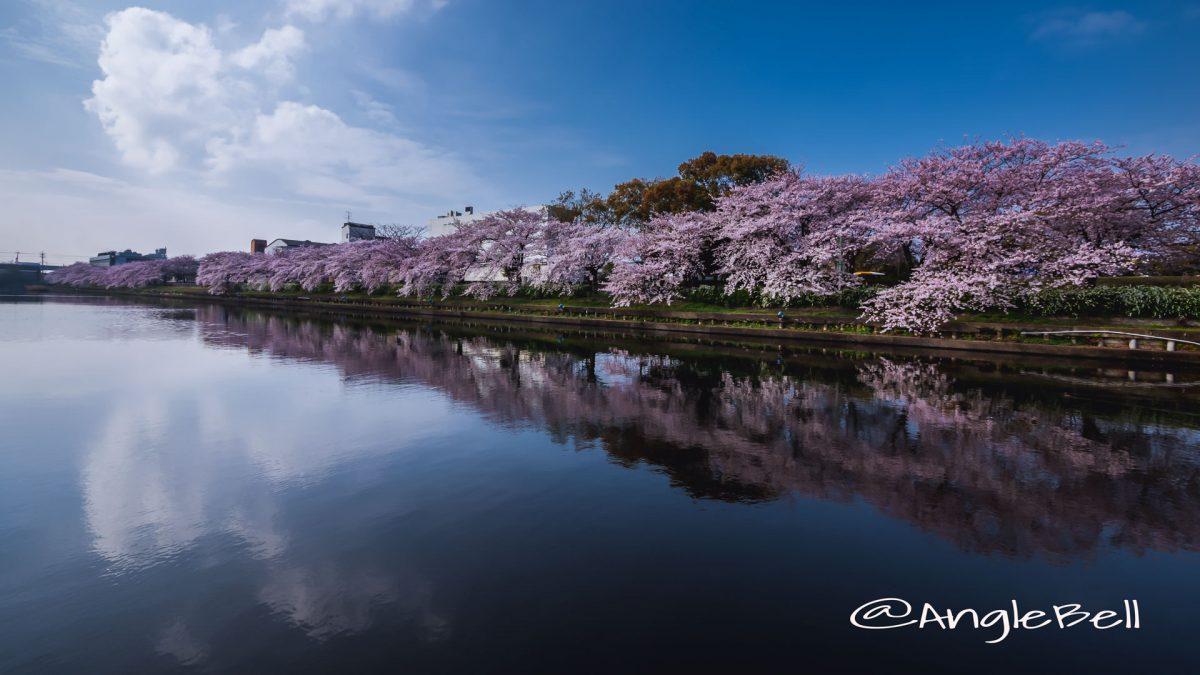 荒子川公園 桜2016