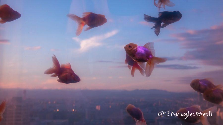 名古屋テレビ塔 金魚の空中遊泳
