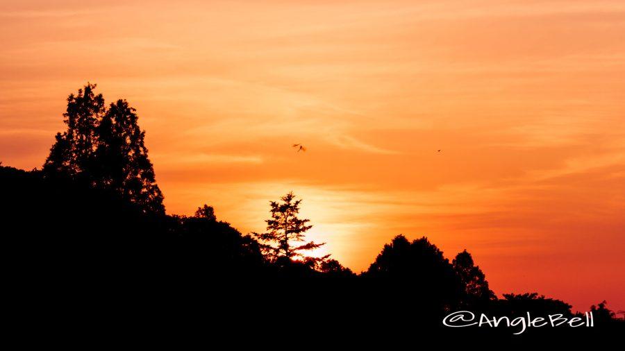 東山動植物園 上池 トンボのシルエットと夕日