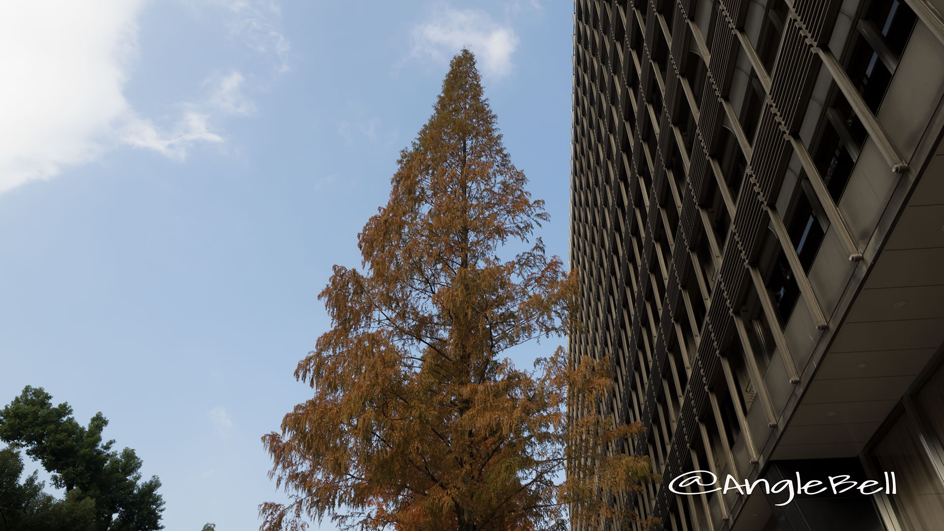 中日ビル前 街路樹