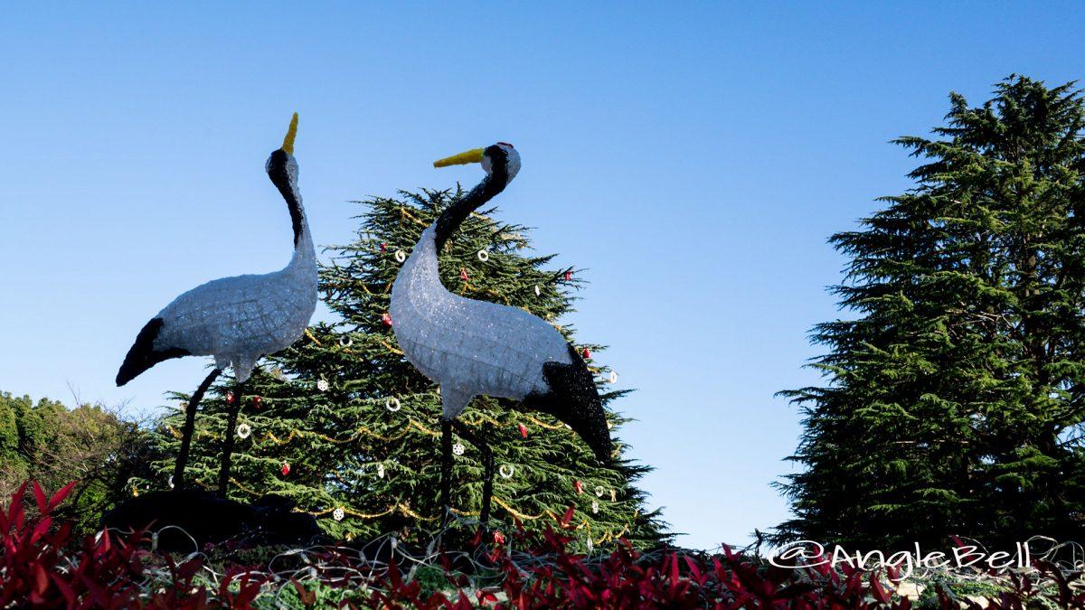 二羽の鶴と ヒマラヤスギツリー2016