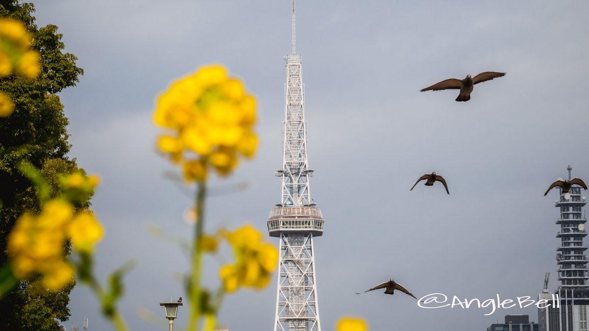昼下がり名古屋テレビ塔