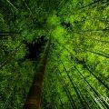 白鳥庭園 竹林 ライトアップ