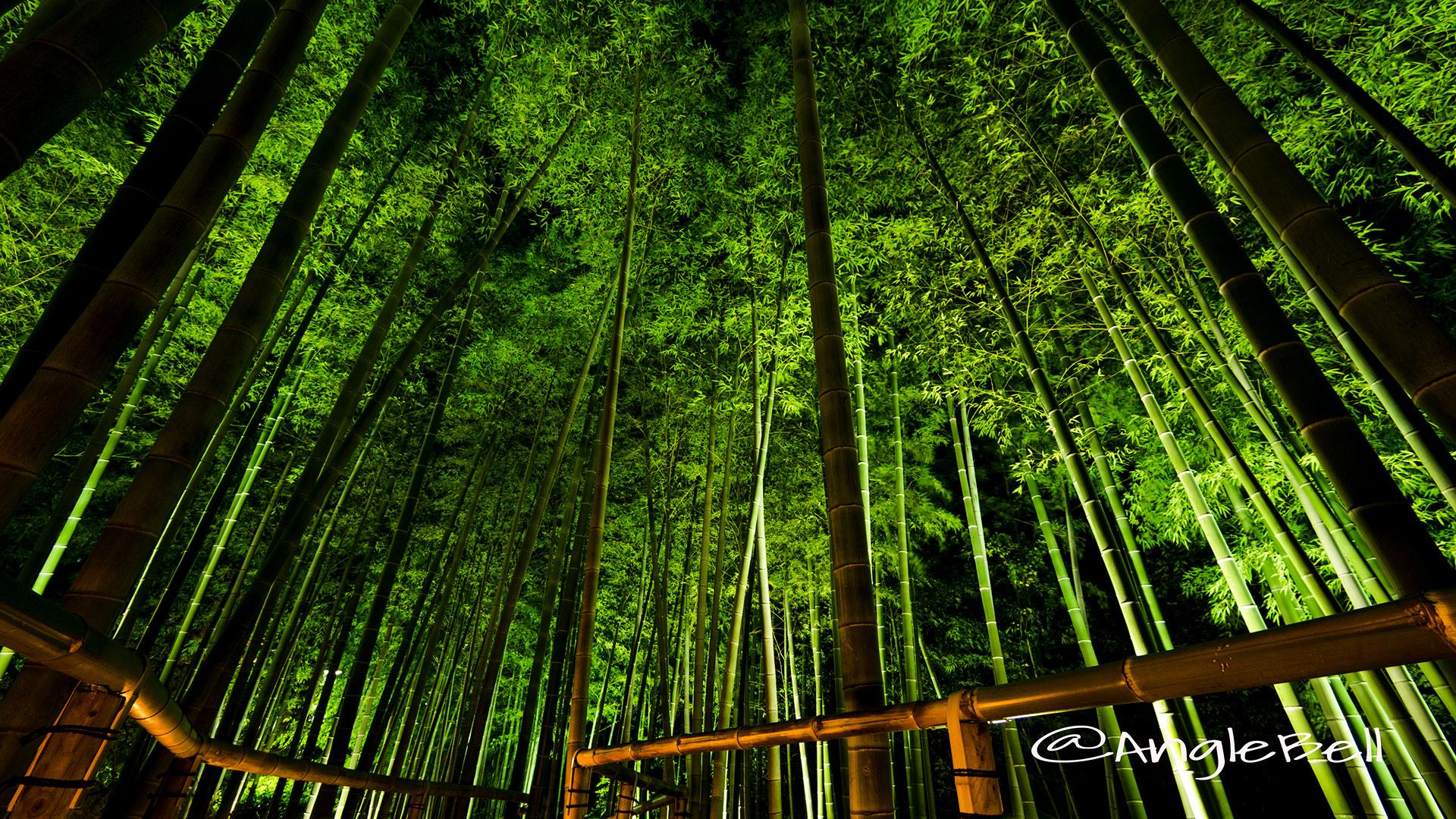 白鳥庭園 竹林「モウソウチク」のライトアップ