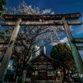三ツ鳥居 大須 三輪神社の淡墨桜(夜桜)