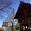 本願寺名古屋別院 鐘楼とメタセコイア大木
