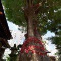 大須 三輪神社 縁結びの木