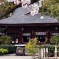名古屋総鎮守 若宮八幡社と桜