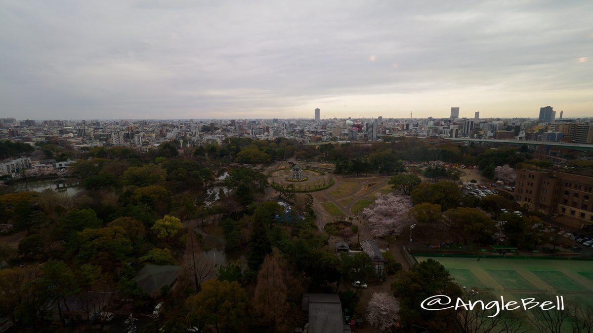 鶴舞公園 桜 2017